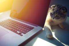 Gato sobre um portátil na mesa com fundo do nascer do sol imagens de stock royalty free