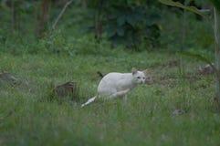 Gato solamente blanco que juega alrededor en las hierbas foto de archivo
