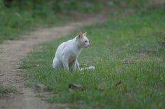 Gato solamente blanco que juega alrededor en las hierbas imagen de archivo