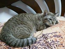Gato solo Fotografía de archivo