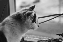 Gato solo Foto de archivo libre de regalías