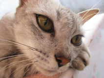 Gato solo Imagen de archivo libre de regalías