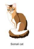 Gato somalí Foto de archivo