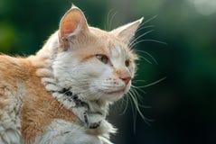 Gato sonolento Fotografia de Stock Royalty Free