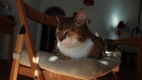 Gato sonolento filme