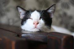 Gato sonolento Foto de Stock Royalty Free