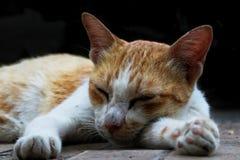 Gato sonolento Foto de Stock