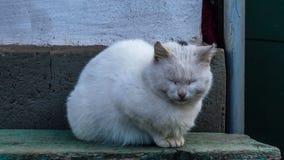 Gato sonolento Imagem de Stock