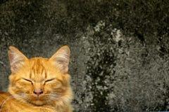 Gato sonriente idéntico Fotos de archivo