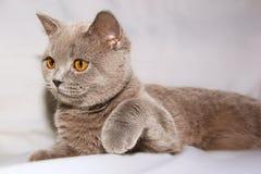 Gato sorprendido Fotografía de archivo