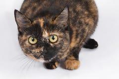 Gato sorprendido Fotografía de archivo libre de regalías