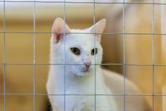 Gato sozinho desabrigado triste macio branco, olhando para fora da gaiola atr?s das barras em um abrigo que espera algu?m para ad fotografia de stock