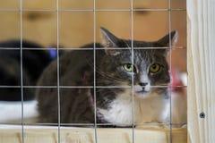 Gato sozinho desabrigado triste, olhando para fora da gaiola atrás das barras no abrigo animal que espera alguém para adotá-lo foto de stock