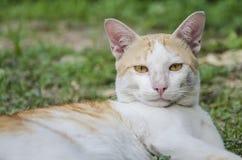 Gato sujo Imagem de Stock Royalty Free