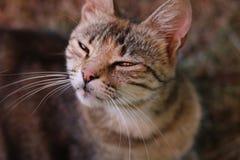 Gato suspeito Imagens de Stock Royalty Free
