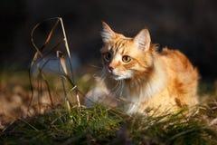 Gato tímido Imagen de archivo libre de regalías