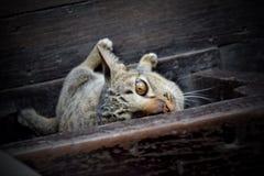 Gato tímido Imagens de Stock Royalty Free