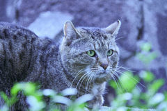 Gato tímido en Belgrado Imagen de archivo
