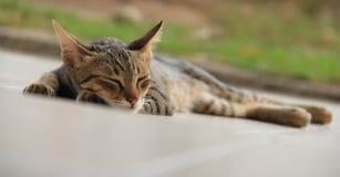 Gato tailandés el dormir Fotografía de archivo libre de regalías