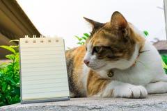 Gato tailandés gordo que miente en una pared cerca de un árbol en la casa antes de puesta del sol Fotografía de archivo