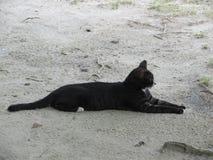 Gato tailandés negro que miente en la arena en la actitud de la esfinge foto de archivo libre de regalías