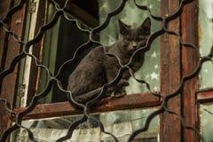 Gato travieso stock de ilustración