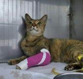 Gato travieso herido que miente reservado en la jaula en clínica veterinaria imagenes de archivo
