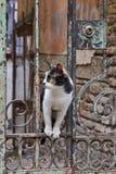 Gato tri coloreado hermoso en la ciudad de Tbilisi, Georgia fotos de archivo libres de regalías