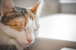 Gato tricolor el dormir Gatito lindo fotos de archivo libres de regalías