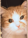 Gato triste Imagen de archivo