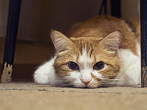 Gato triste Imagen de archivo libre de regalías
