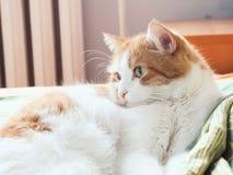 Gato triste Fotografía de archivo