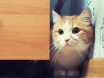 Gato triste Fotografía de archivo libre de regalías