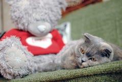 Gato triste Foto de Stock Royalty Free