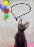 Gato triste criado en línea pura Fotografía de archivo libre de regalías