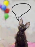 Gato triste criado en línea pura Foto de archivo libre de regalías