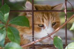 Gato triste en la jaula foto de archivo libre de regalías
