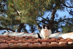 Gato turco imagens de stock