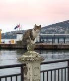 Gato Turquía del puerto de la isla de los príncipes Fotografía de archivo