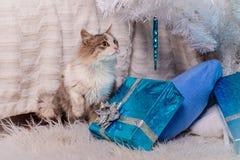 Gato - um presente sob a árvore de Natal Fotos de Stock
