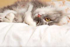 Gato upside-down Imagenes de archivo