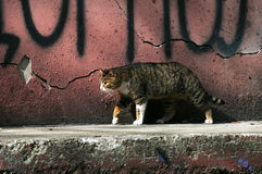 Gato urbano imagens de stock royalty free