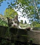 Gato - vaquinha encantadora imagem de stock