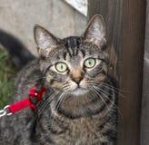 Gato vecino Imagen de archivo libre de regalías
