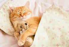 Gato vermelho bonito do sono em uma cama imagens de stock royalty free