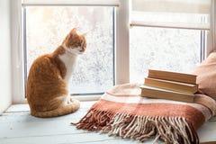gato Vermelho-branco na soleira Fotos de Stock Royalty Free