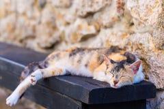 Gato vermelho da rua que dorme no banco Imagem de Stock