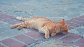 Gato vermelho desabrigado velho na rua video estoque