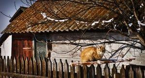 gato Vermelho-dirigido Fotografia de Stock Royalty Free