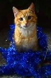 Gato vermelho e Natal azul fotografia de stock